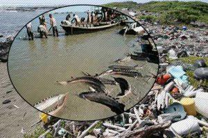 عوامل موثر در کاهش جمعیت ماهی خاویاری