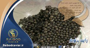 قیمت خاویار ماهی ایرانی